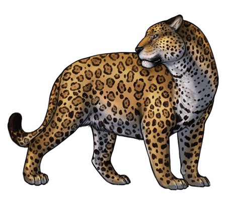Jaguar transparent vector. Png cliparts peoplepng com