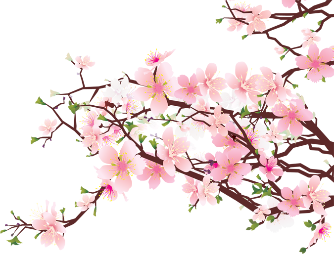Japanese cherry blossom png. Blossoms artistic elements clip