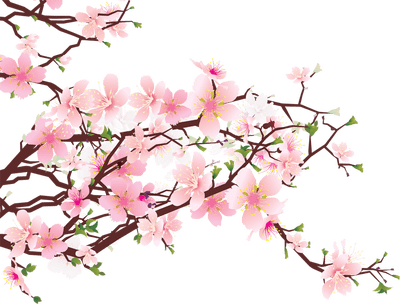 Japanese flower png. Flowers on tree transparent