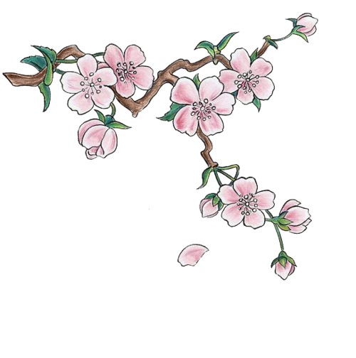 Japanese flower png. Image cherry blossoms animal