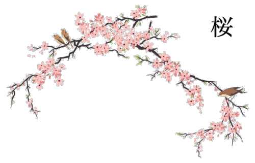 Japanese flower png. Flowers transparent cherry blossoms