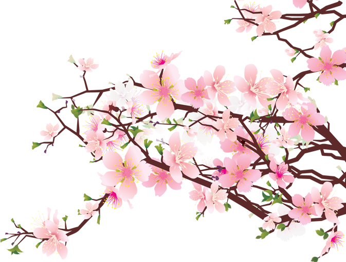 20 Japanese Transparent Cherry Blossom For Free Download On Ya Webdesign