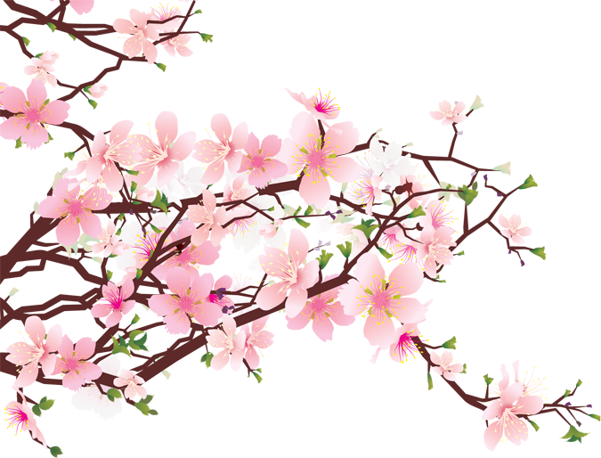 Japanese transparent cherry blossom. Png images free icons