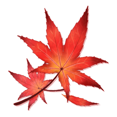 Japanese transparent maple leaf. Drawing at getdrawings com