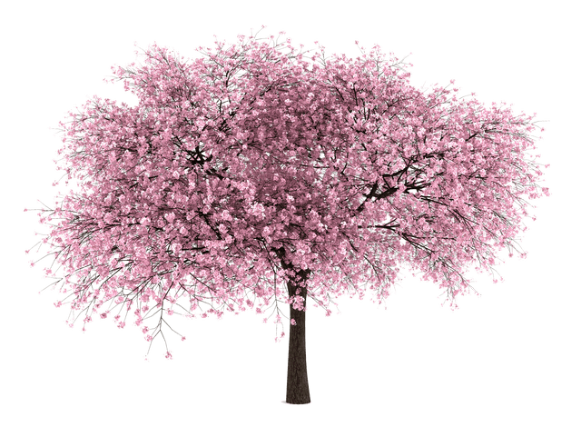 Japanese tree png. Images free cutouts