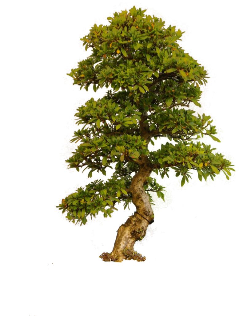 Japanese tree png. By camelfobia on deviantart