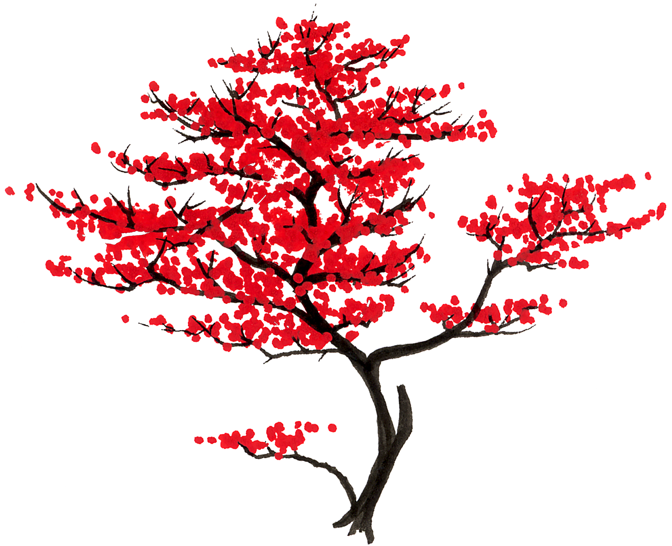 Japanese transparent maple leaf. Varieties maples only voice