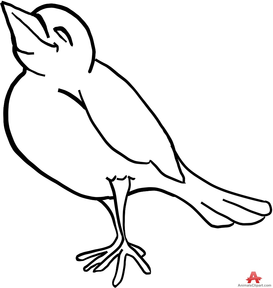 Bird clipart sketch. Blue jay pencil and