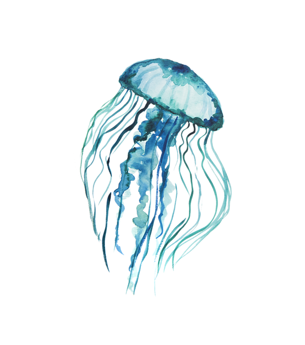 Jellyfish png. Download free image with