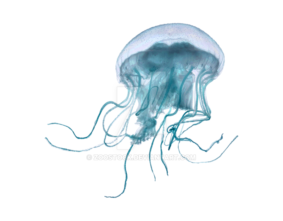 Jellyfish tentacles png. Sea on a transparent
