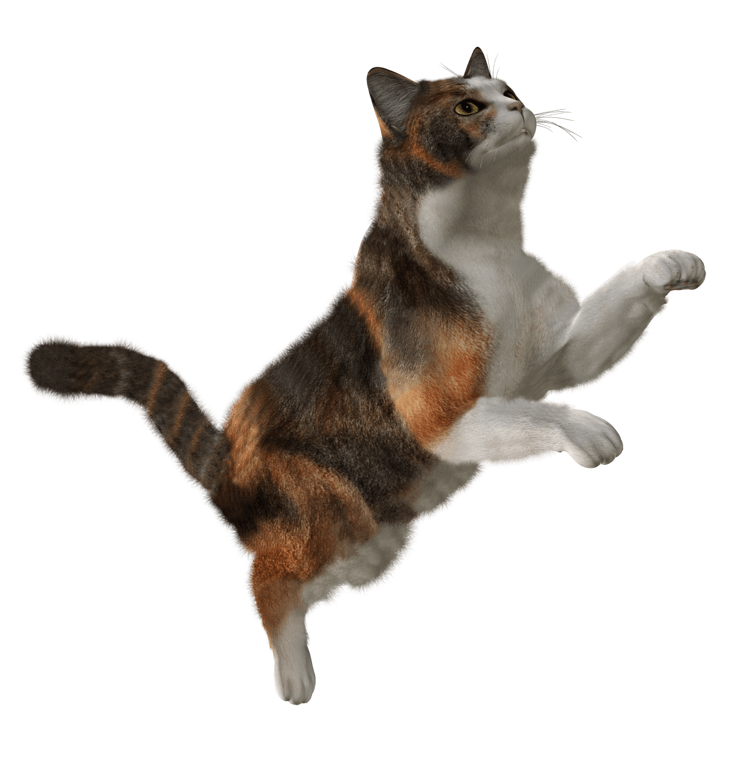 Jumping cat png. Cute image download picture