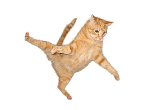 Kitten jumping png. Cat jump transparent stickpng