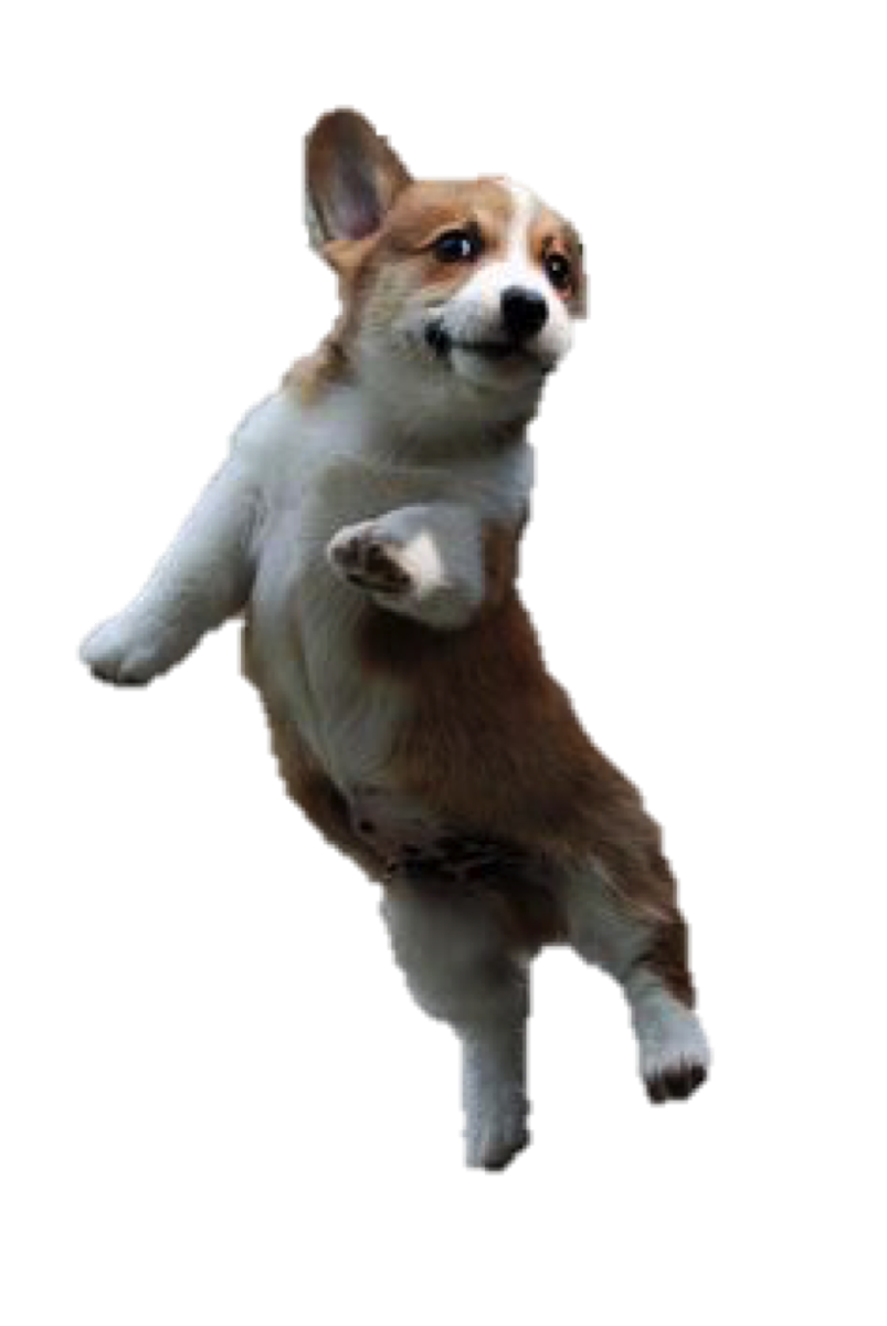 Jumping dog png. Puppy on twitter tester
