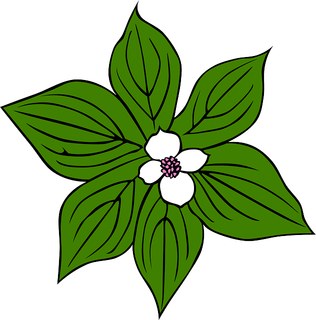 Jungle flower png. Cartoon images of flowers