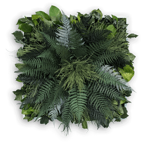 Jungle plants png. Picture x cm with