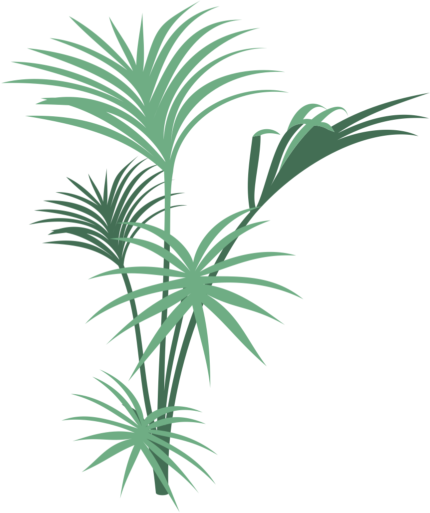 Jungle plants png. Collection of clipart