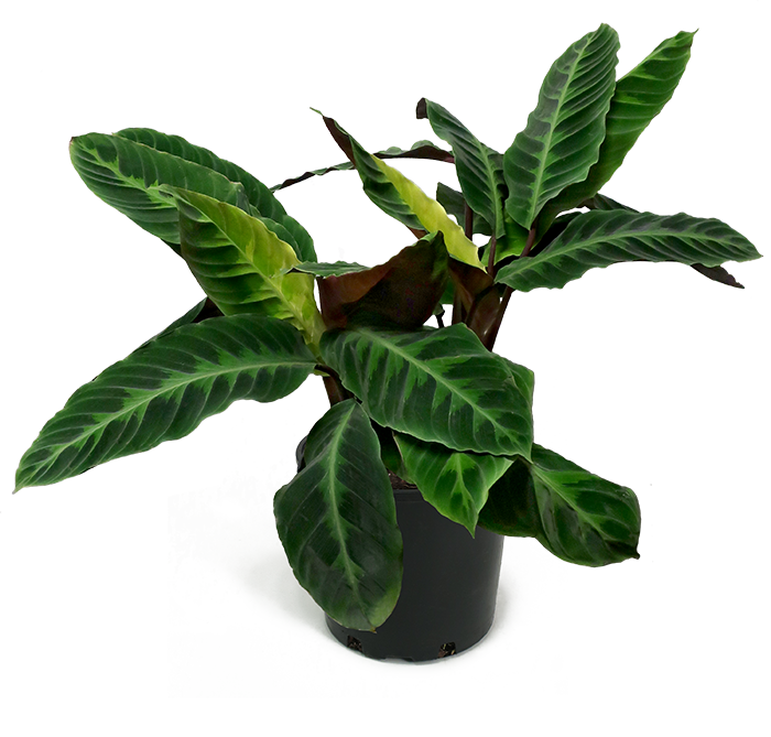 Jungle plants png. Images in collection page