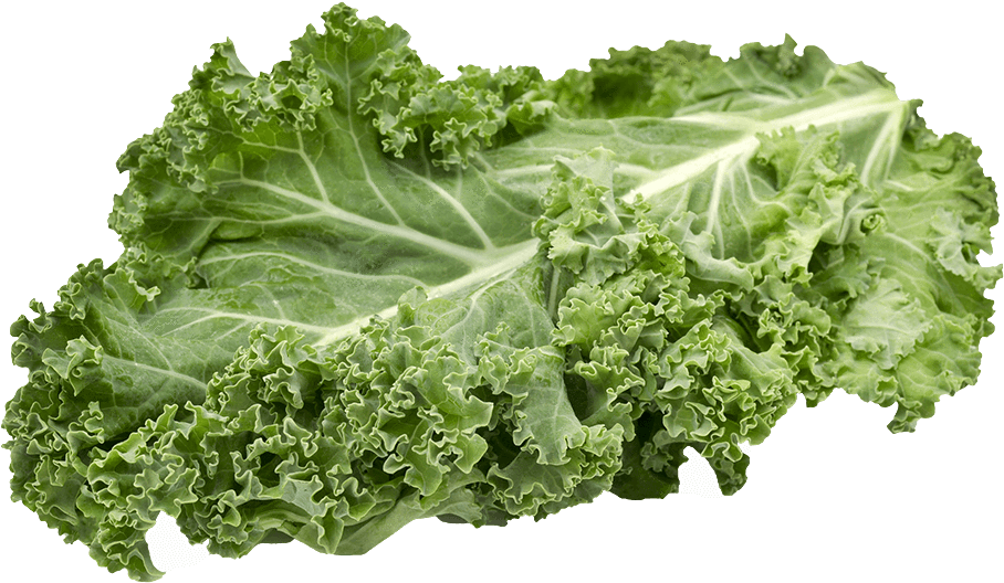Kale transparent lettuce. Download hd champagne deluxe