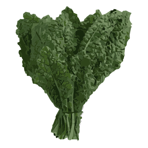 Kale transparent. Herb illustration png svg