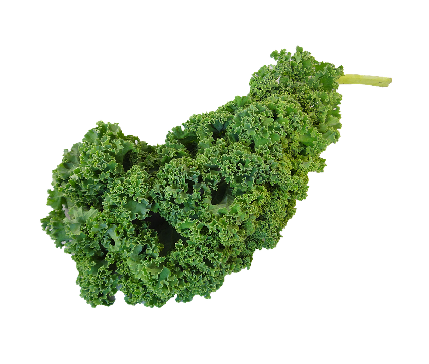 kale transparent vegetable