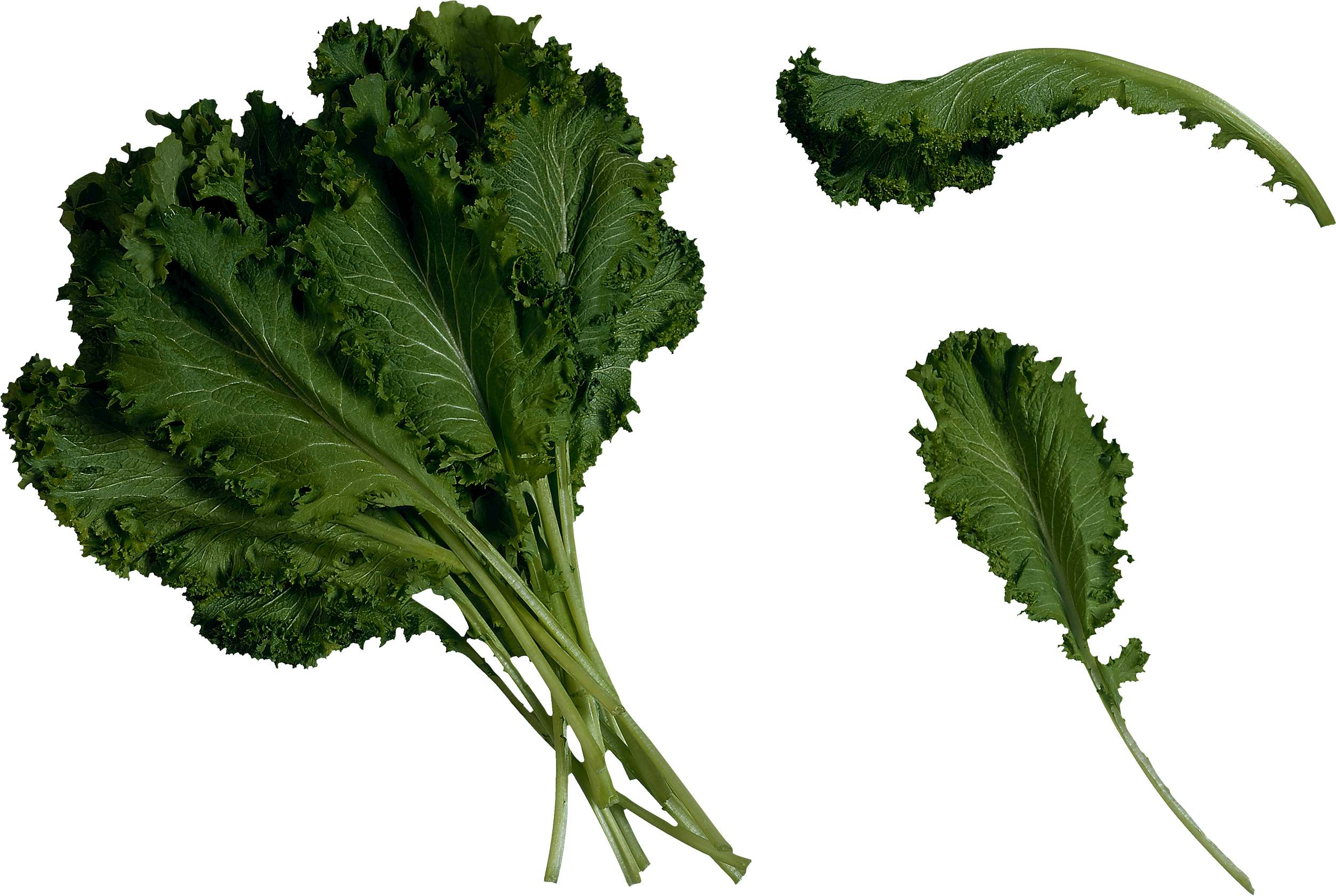 kale transparent bunch