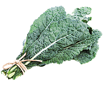 kale transparent lacinato