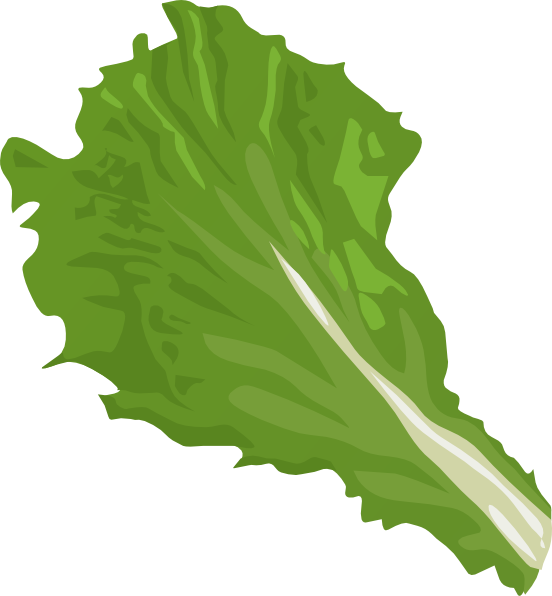 Kale transparent lettuce. Image stock free download