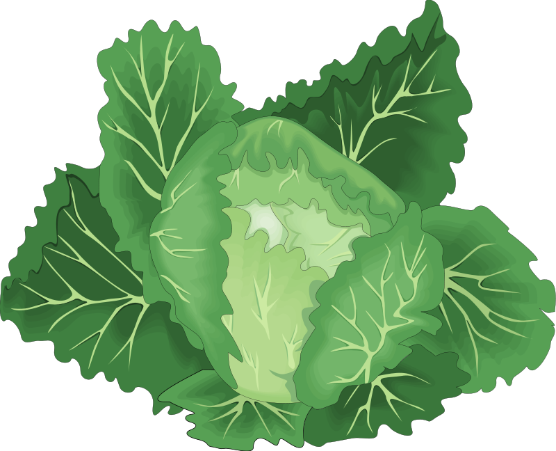 Kale vector leafy. Collection of free collards
