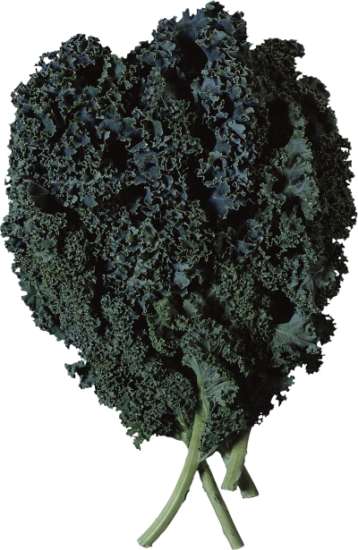 Kale vector leafy. Vegetables png dlpng salad