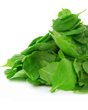 Vector vegetables leafy vegetable. Greens mixed