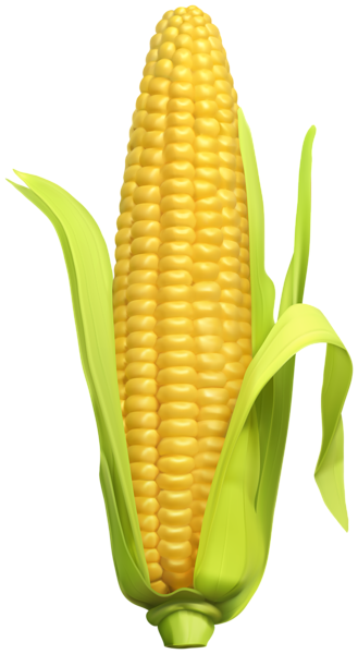 Kernel clipart corn seed. Clip art image gallery