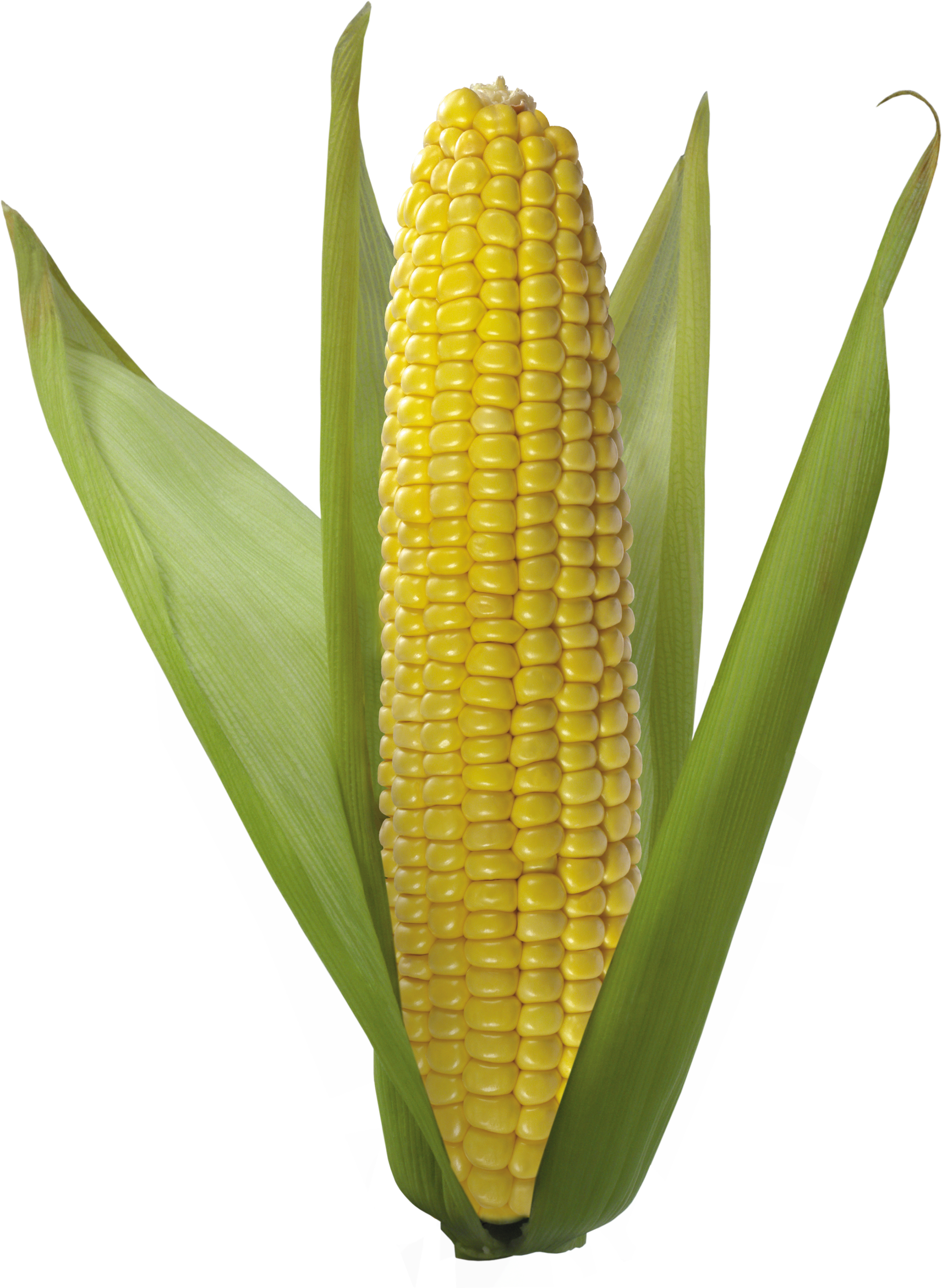 Kernel clipart corn seed. Png images download yellow