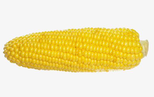 kernel clipart corn seed