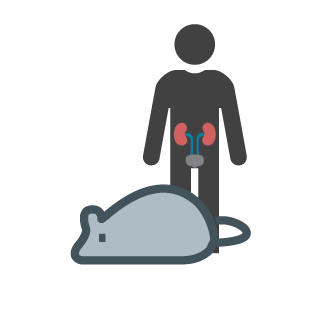 Kidney clipart anterior. Pittsburgh center for research
