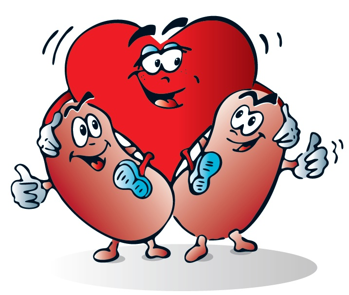 Kidney clipart kidney shape. Health the philippine society