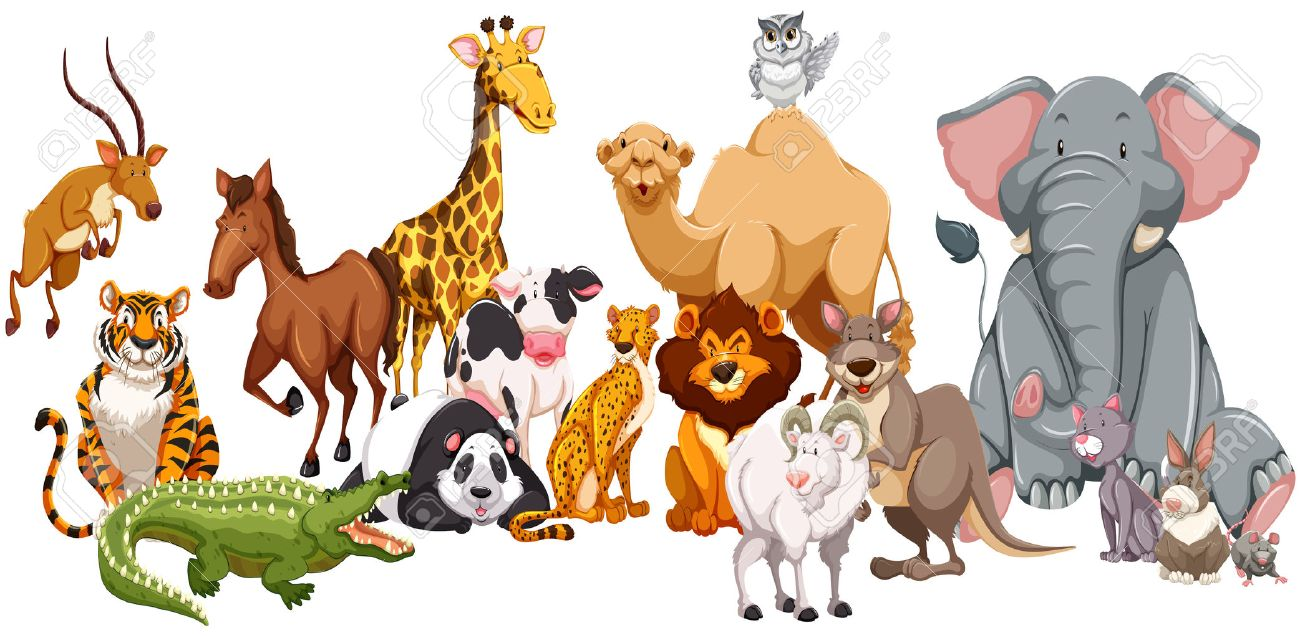 Kind clipart real animal. Different of wild