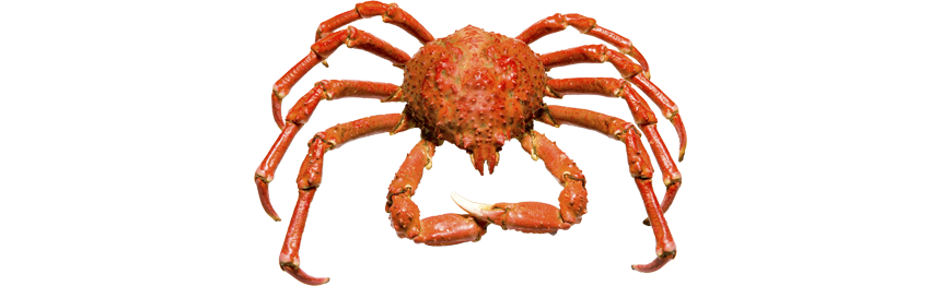 King crab png
