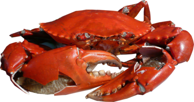 Carb legs png. Crab images free dowbload