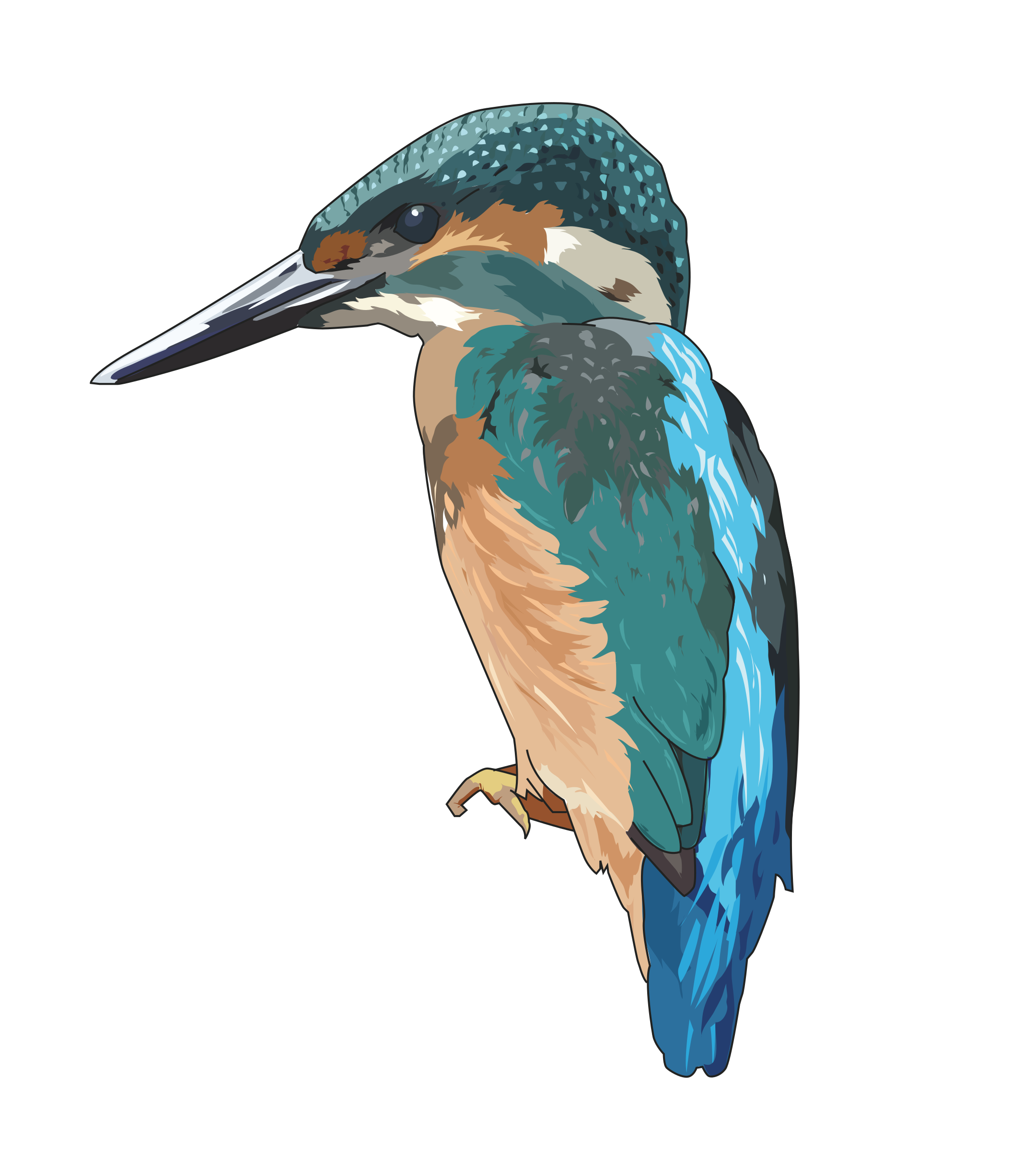 Function drawing kingfisher. Icons png free and
