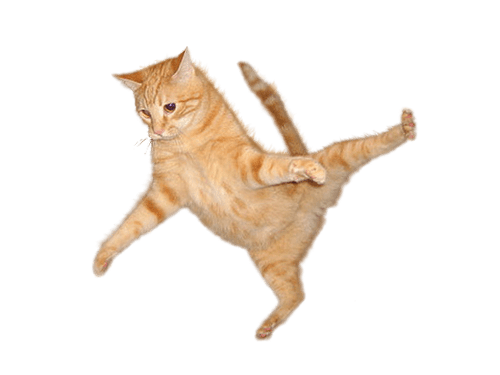 Kitten jumping png. Felik intelligent pet companion