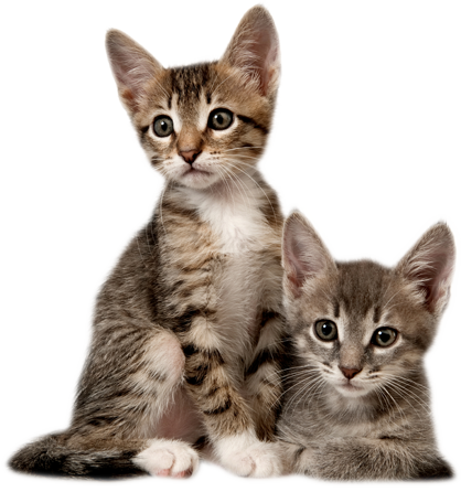 Kitten png images all. Kittens transparent picture black and white download