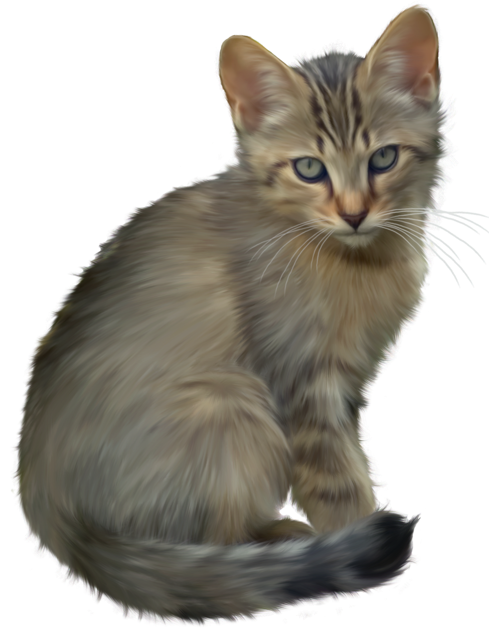Cute kitten png clipart. Transparent jpeg cat banner library library