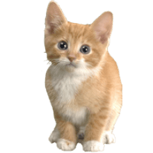 Kitten background image png. Kittens transparent picture black and white
