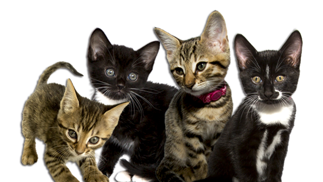 Meet the cbeebies bbc. Kittens transparent clipart royalty free library