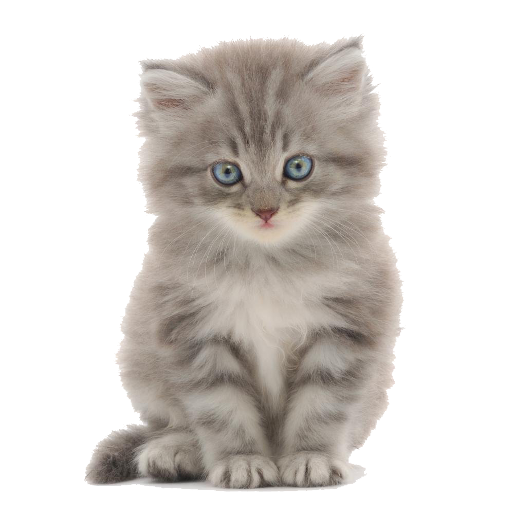 Cute background png hd. Kittens transparent black and white
