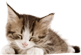Are my favorite animals. Kittens transparent clipart free download