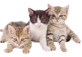 Surrender a cat to. Kittens transparent royalty free stock