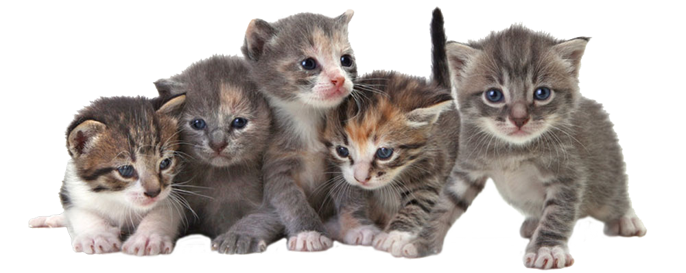 Kittens transparent. Cats health adult feeding