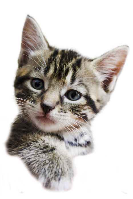 Kittens transparent background. A helping hand on