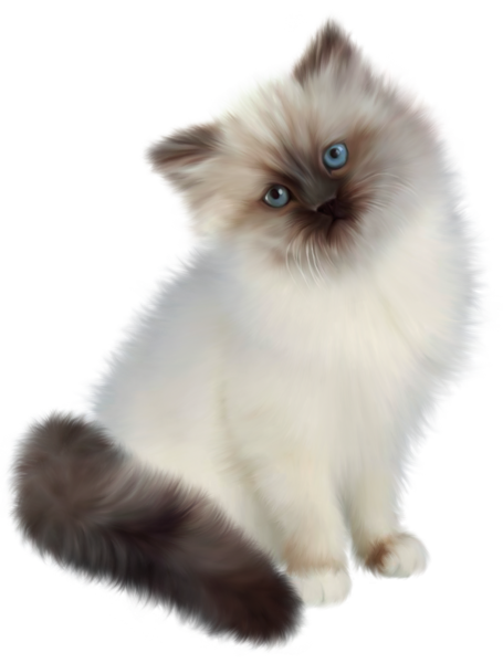 Kittens transparent fluffy. Kitten png clipart k